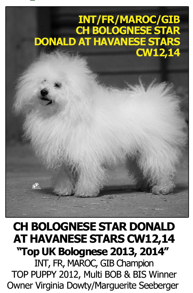 Best Dog Shampoo for Bolognese White Texture Dog Bichon Fries Champion Crufts Winner