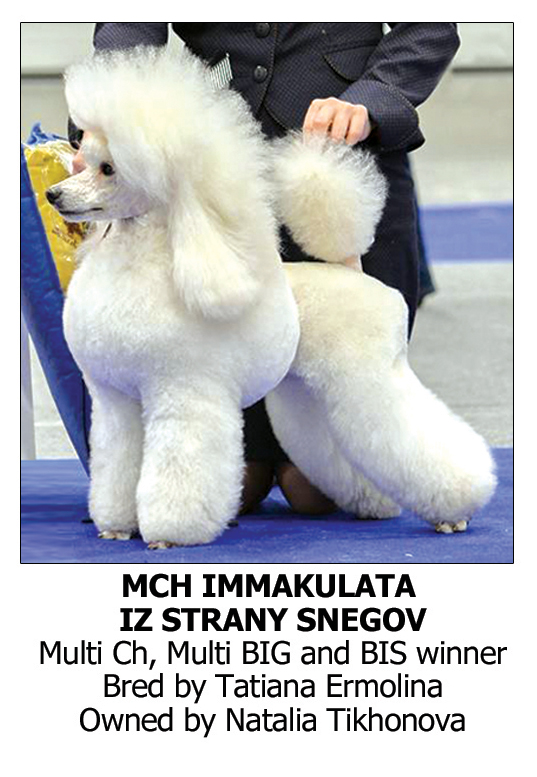 Best Dog Shampoo for Chow Chow, Crufts Champions