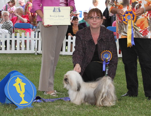 Best Dog Shampoo for Havanese, Best In Group, Havanese Leeds 2011