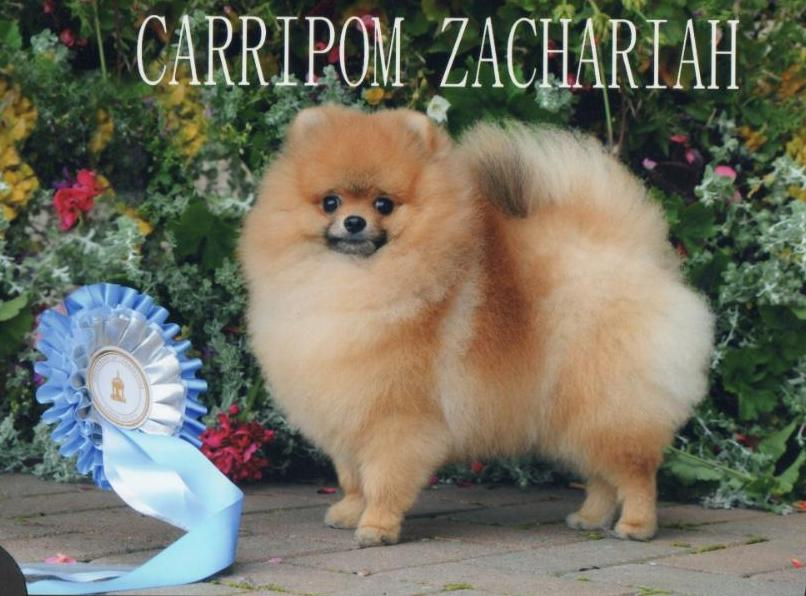 BEST DOG SHAMPOO FOR POMERANIAN