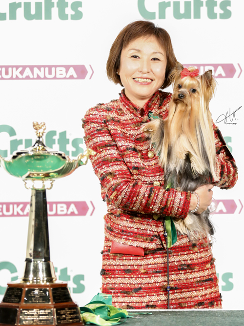 JAPANESE, YORKSHIRE TERRIER CRUFTS 2017 INT CH MY PRECIOUS JP KAGAYAKI Owner:  MRS C & MR H KADOWAKI