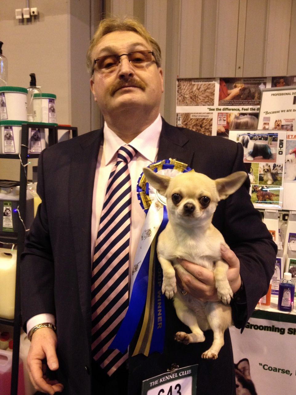 The Best Shampoo for the Best Chihuahua LKA 2012 Best Toy Group Winner