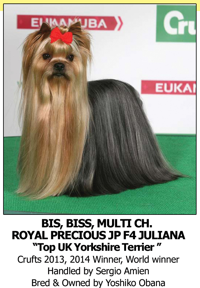Best Dog Shampoo for Yorkshire Terrier Crufts Champions BOB Winner Top Dog