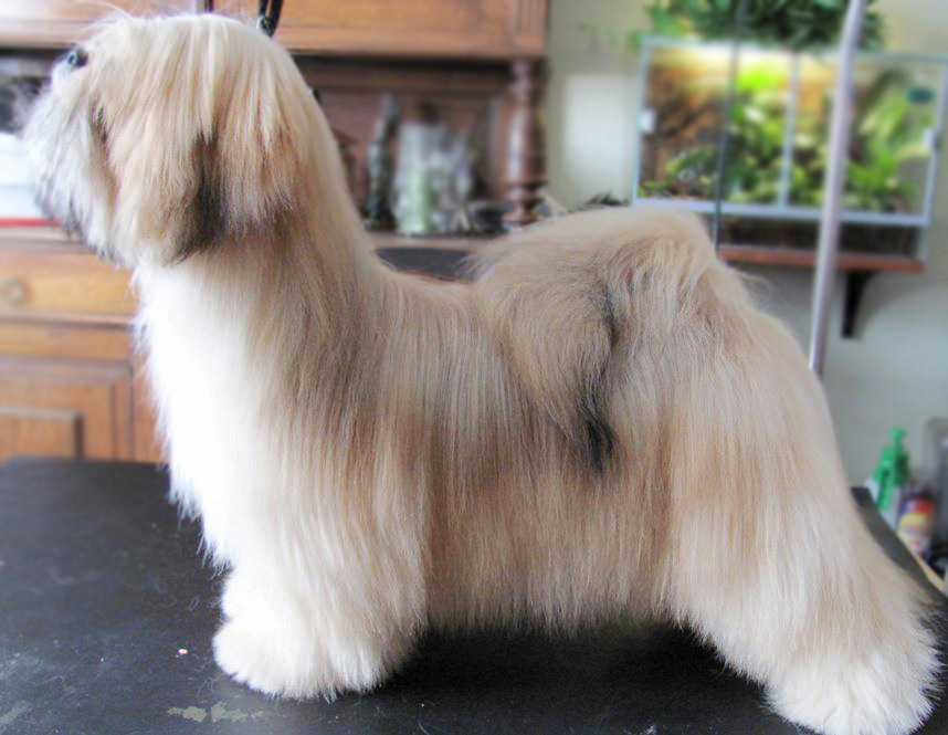 Best Dog Shampoo for Lhasa Apso
